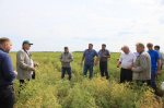 Training for seed growers in Sibirskaya Niva